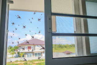 Fly screens for windows