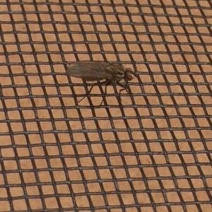 fly mesh